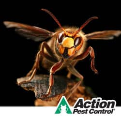 Protecting Your Home And Family From Stinging Insects