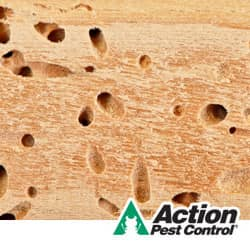 How To Tell If There Are Termites In The Home