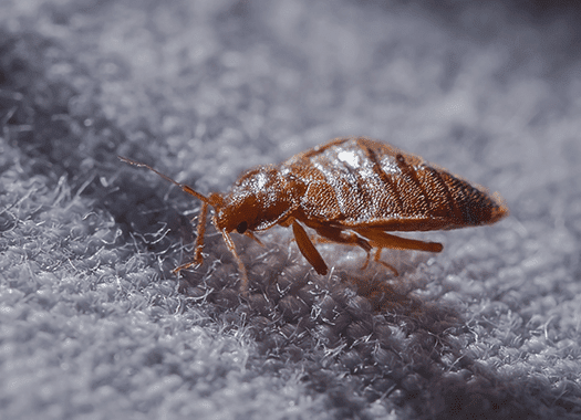 bed bug found in indianapolis home