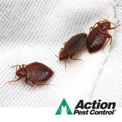 Bed Bugs Causes And Tips For Preventing