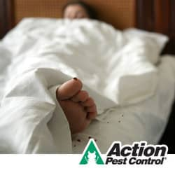 How to prevent bed bugs in 2014 for How do i prevent bed bugs