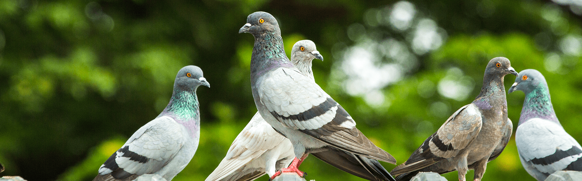 pigeons perched on business