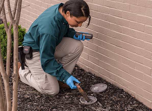 a female technician inspecting a termite baiting station outside of a bowling green home